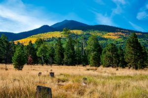 moving to flagstaff