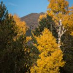 Fall Flagstaff Family Traditions to Start This Year!