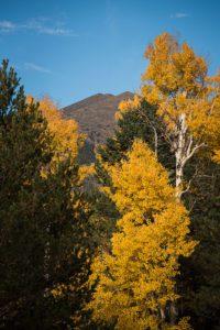 Fall Peaks Aspens Katie Woodard-1