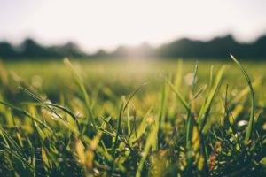 grass-meadow-sunshine-9056