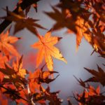 What falling leaves are teaching me