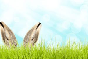 Egg Hunt (1)