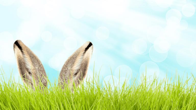 Flagstaff Family Neighborhood Egg Hunt