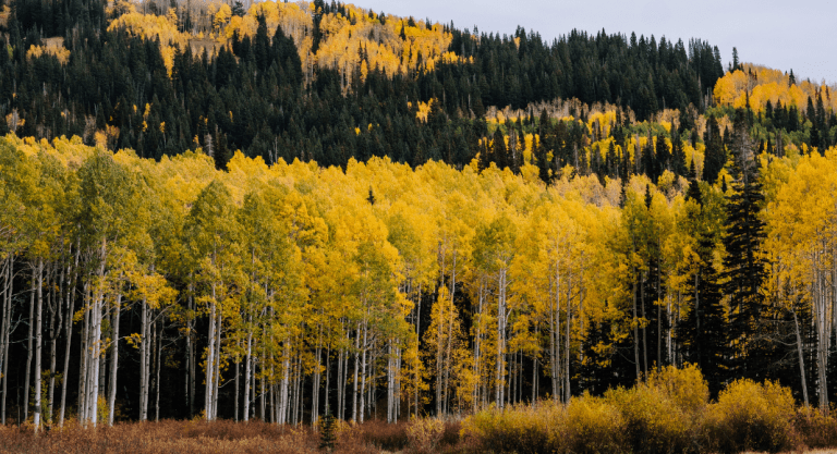 Guide to Fall Color in Flagstaff